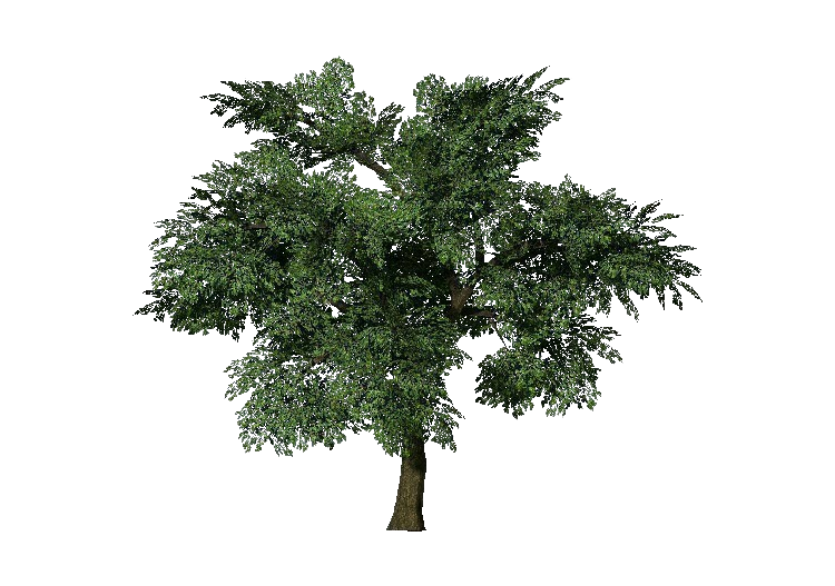 3D Trees - Chêne - ACCA software