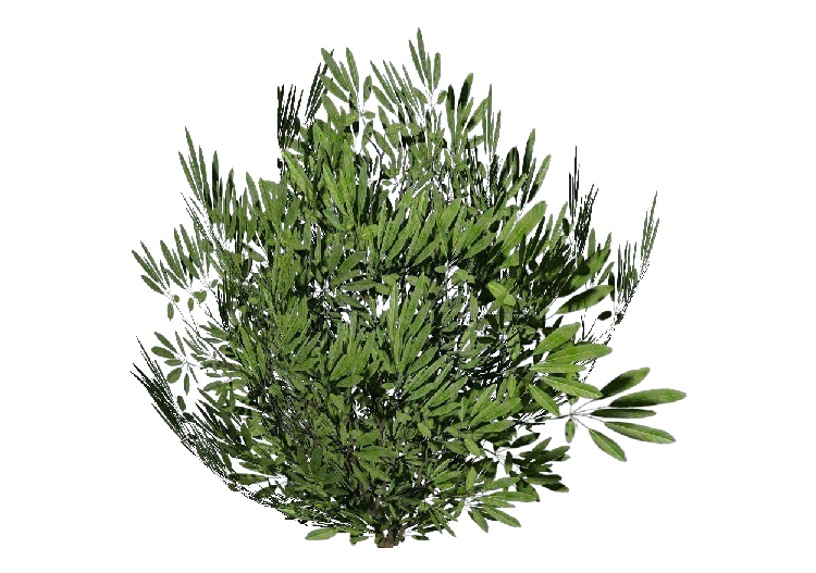 3D Bushes - Laurier - ACCA software