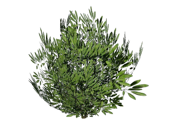 3D Bushes - Oleandro - ACCA software
