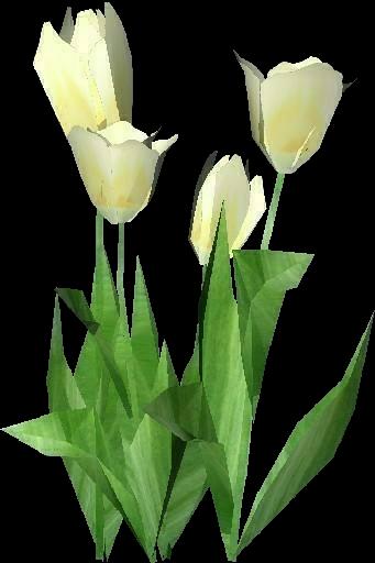 Piante 3D - Tulipano bianco - ACCA software