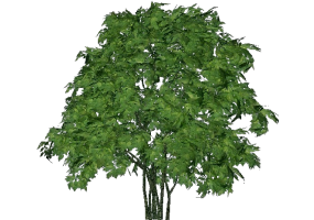 3D TREES - ACCA software