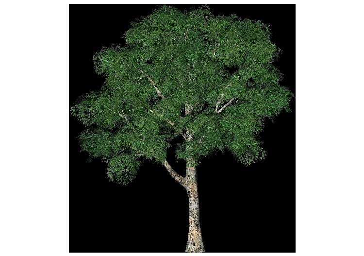Alberi 3d platano comune acca software for Software progettazione giardini 3d free