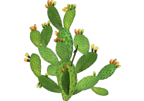 3D Flowers - Prickly Pear