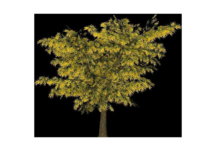 Árboles 3D