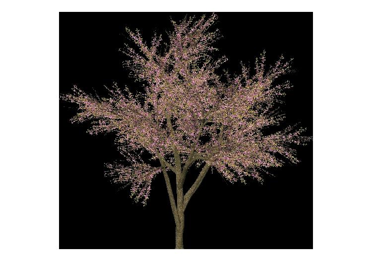 Fiori Bagnoli Irpino : 3d trees ciliegio in fiore mcdesign acca software